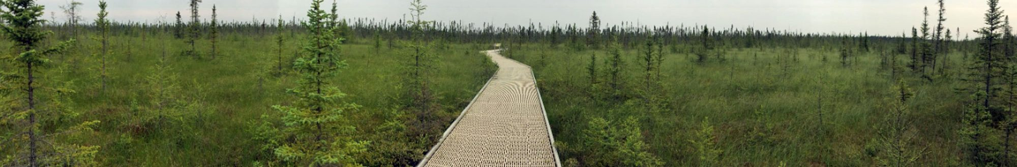 Big Bog boardwalk