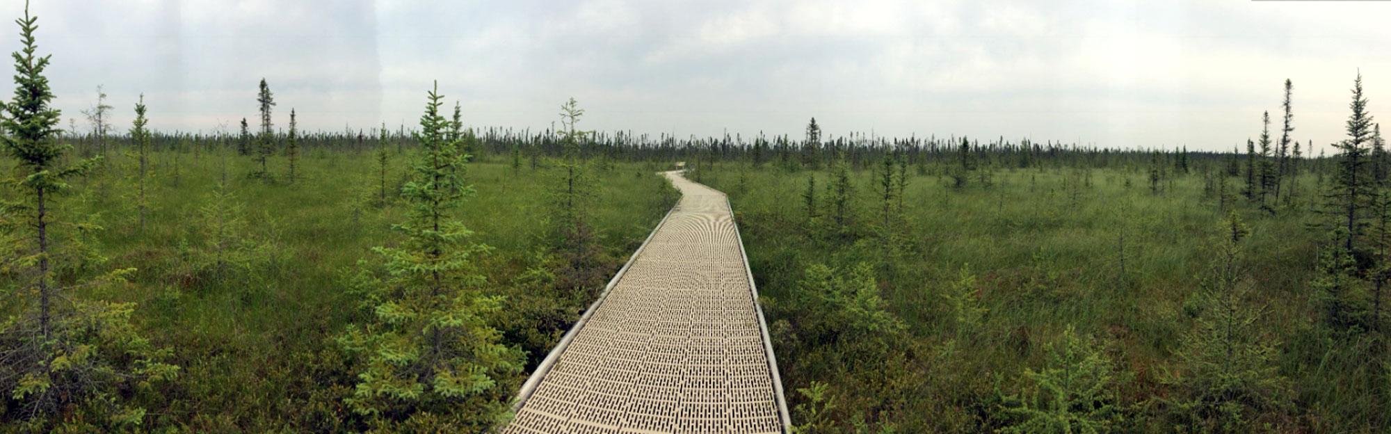 Big Bog boardwalk