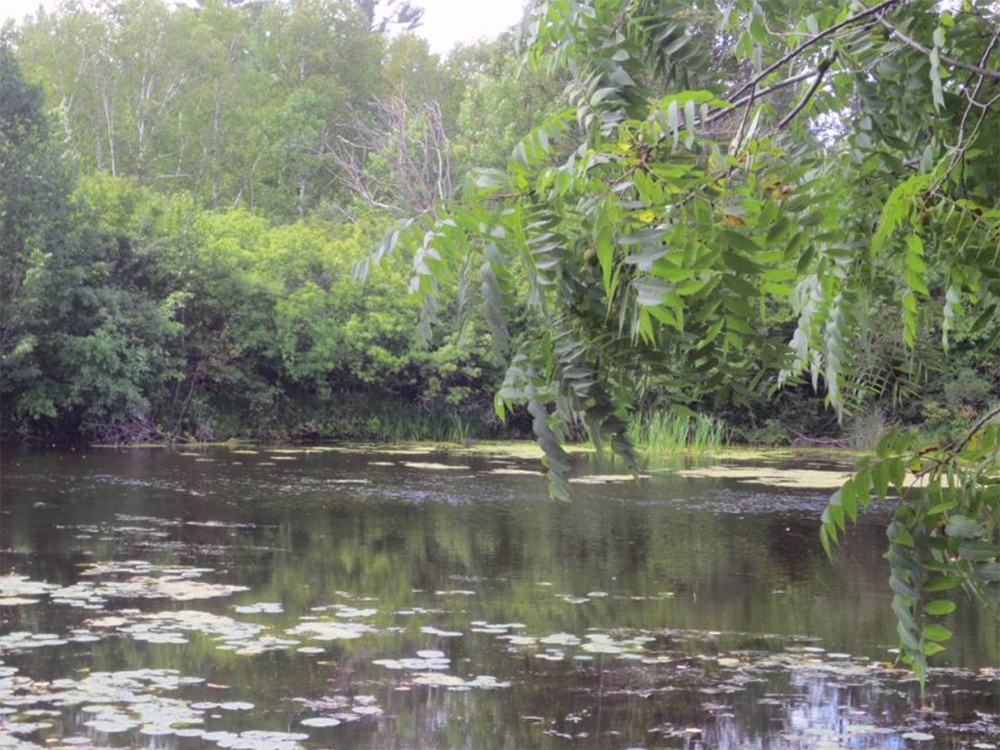 Creek with lush greenery on shores