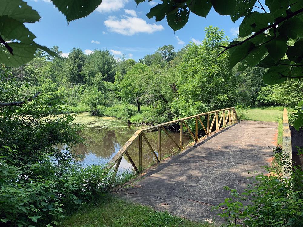 footbridge over forested creek