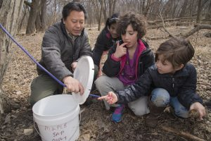 park naturalist shows kids how to tap a tree for maple syrup