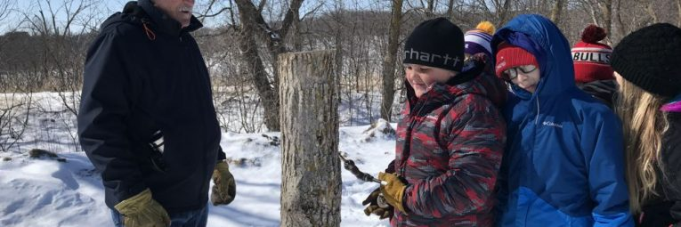 kid practicing drilling into tree to tap for maple syrup