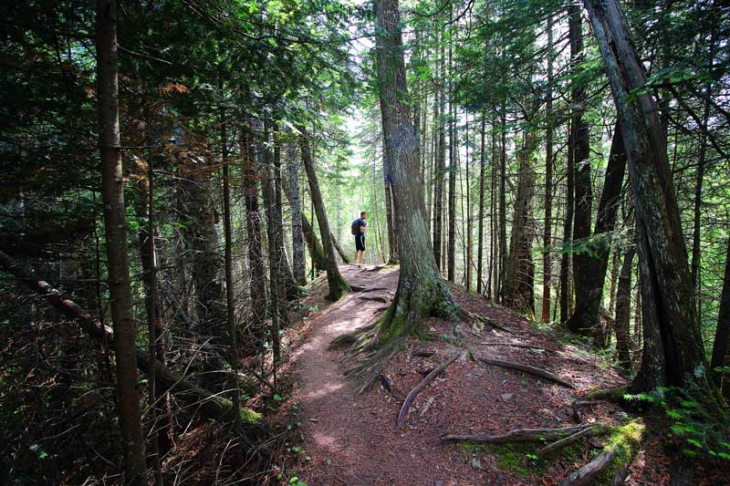 Hiker amidst tall trees on the Superior HIking Trail
