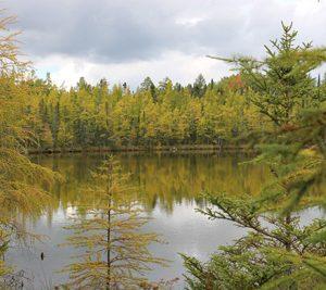 Lake Bemidji State Park by Nancy Jahnel
