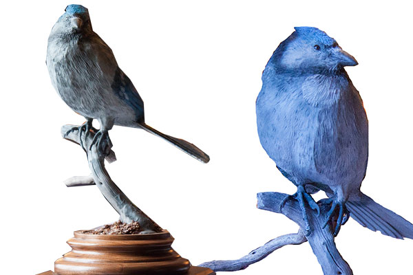 Bluejay carving
