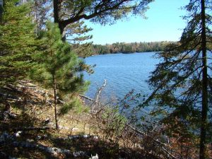 Lake with evergreens in foreground (Photo by MN Photos courtesy Flickr Creative Commons)