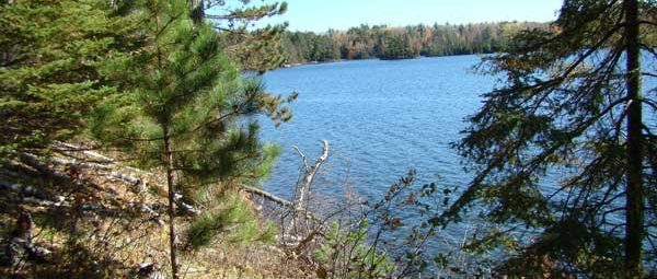 Lake with evergreens in foreground