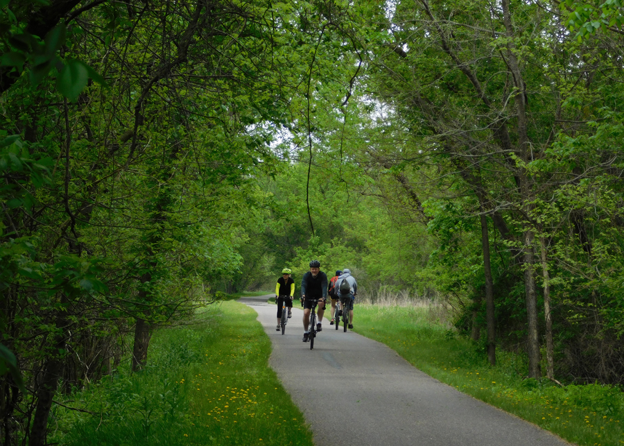 four bicylists passing on trail under tree canopy
