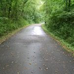 paved trail through woods