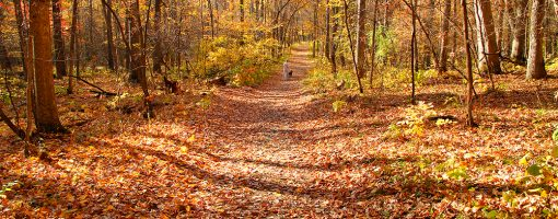 Fall walk with the pup. By Jeff Moravec