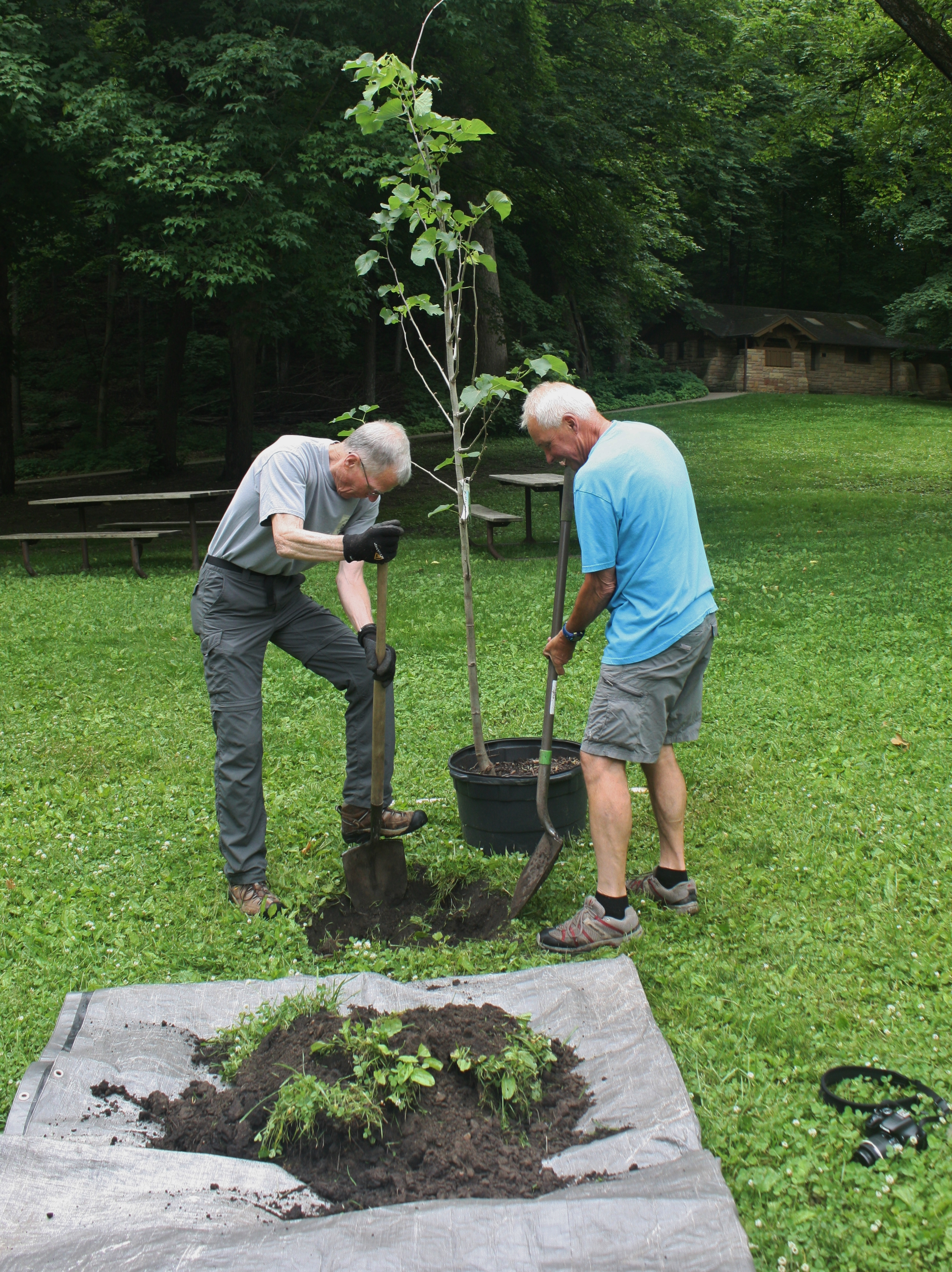 volunteers dig a hole to plant a tree