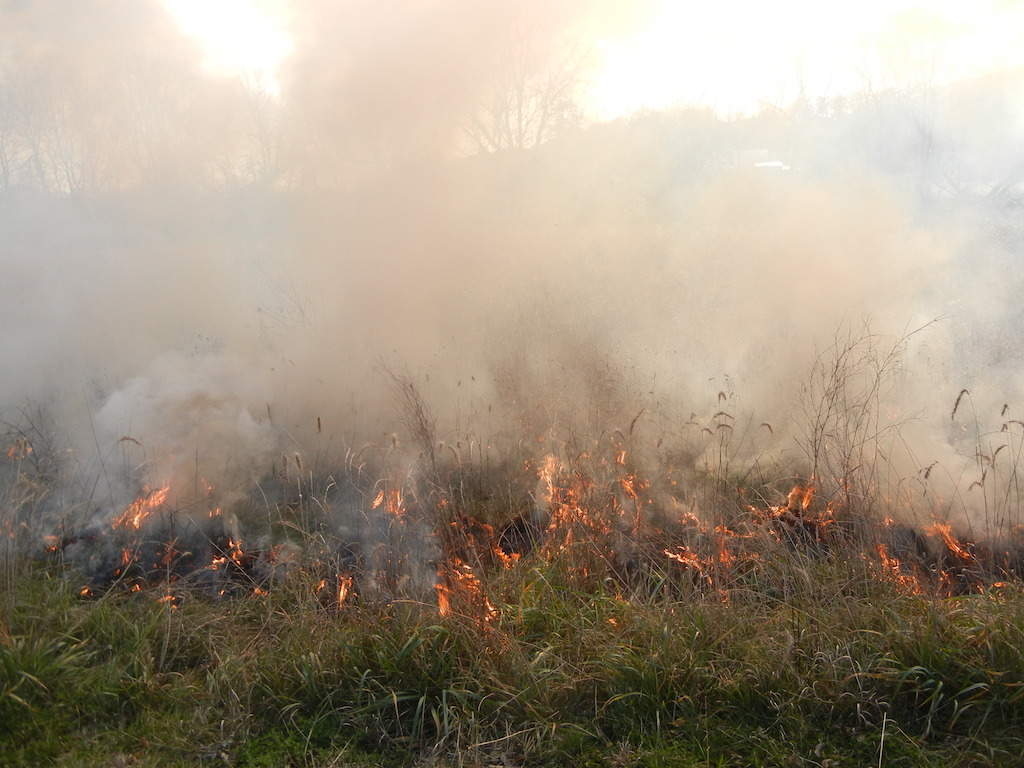 fire smolders in the prairie for a controlled burn