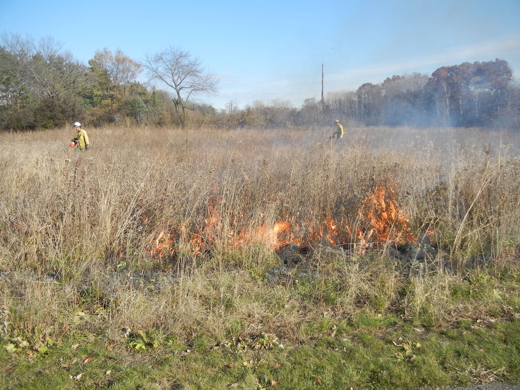Workers light the prairie grass for a controlled burn