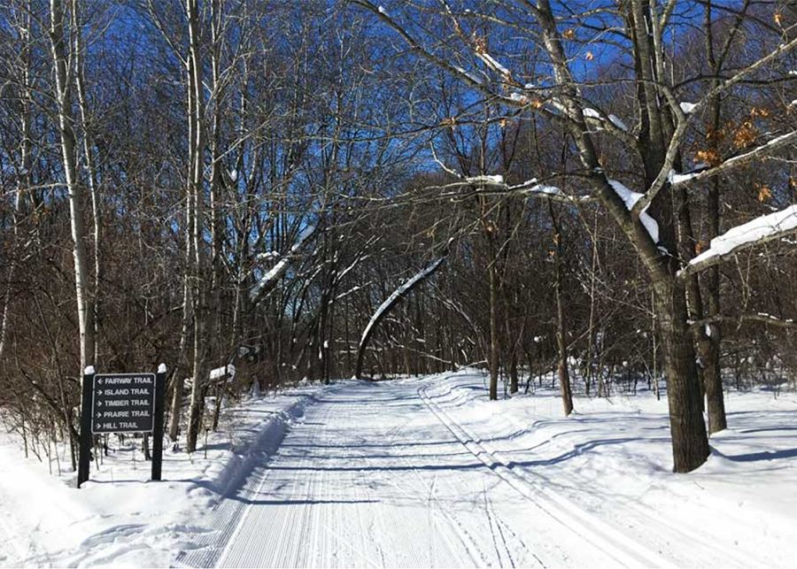 Ski trail through the woods