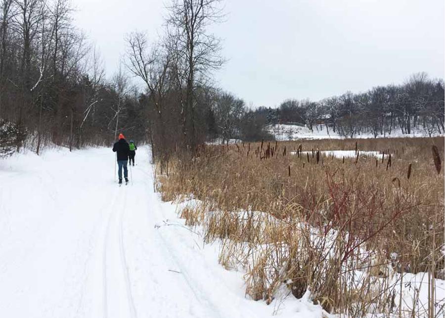 Skiiers on trail