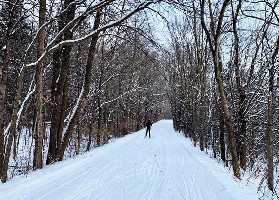 Skiier on trail in woods