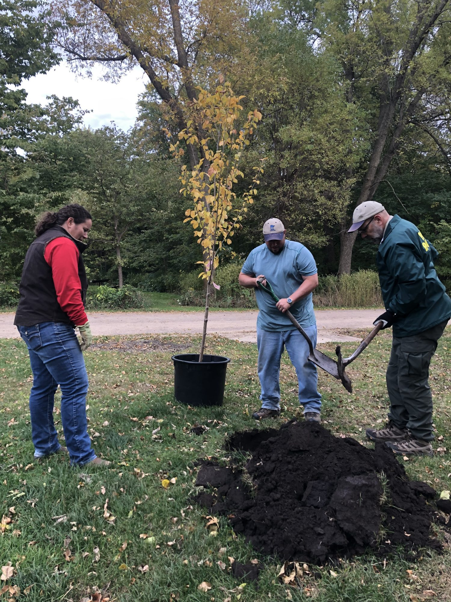 volunteers and a park staff member use shovels to plant a tree