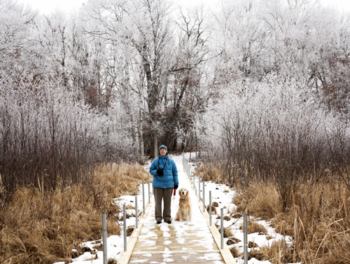 hiker in winter on boardwalk