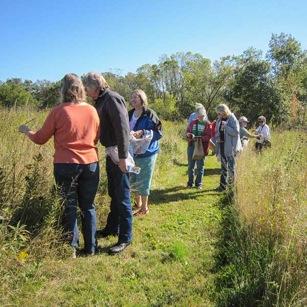 Group walking through prairie and looking at plants
