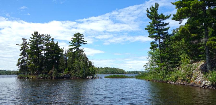 Pine covered island on lake