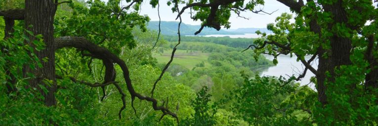 View through trees of Lake Pepin