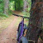 Mountain bike resting on tree