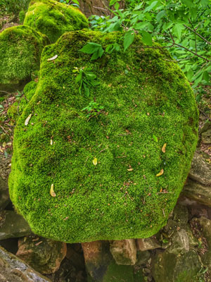 Moss near the sandstone wall on land acquired