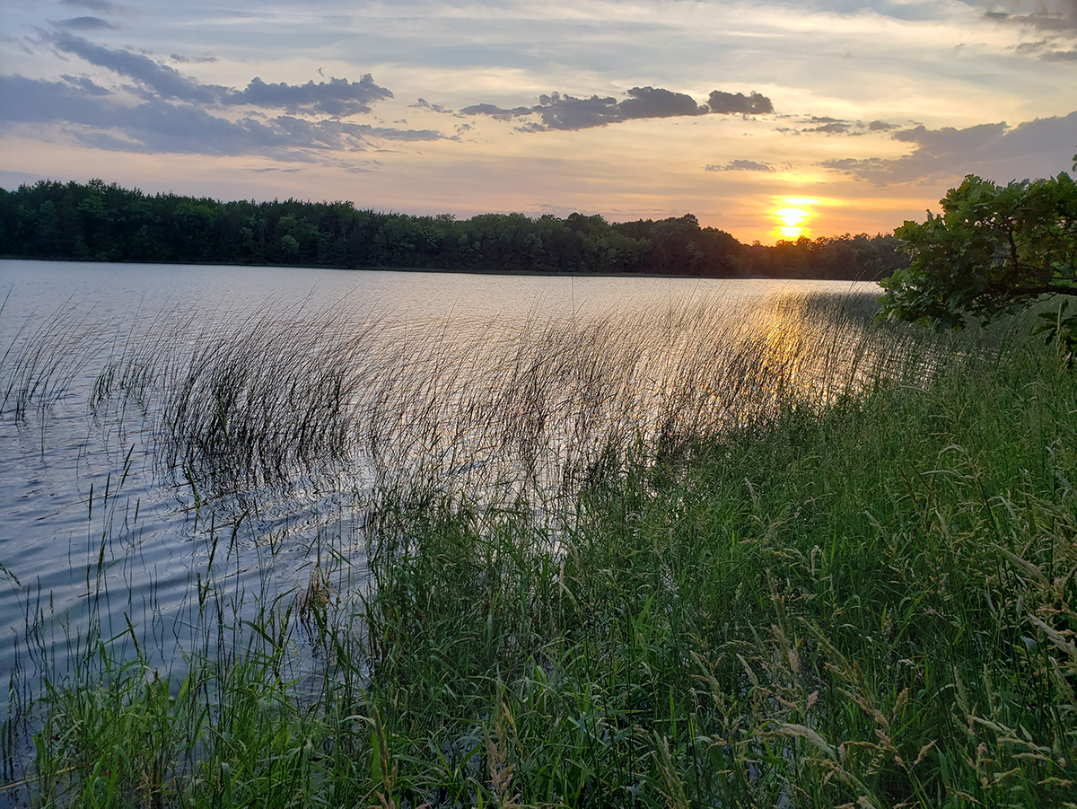 Sunset over a reedy lake