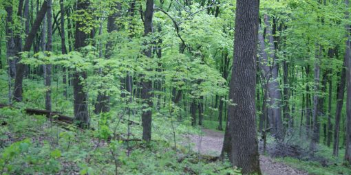Forested area at Forestville by Jessica Hayssen