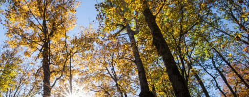 Trees looking up. Lindsey Kramer/P&TC Photo Contest