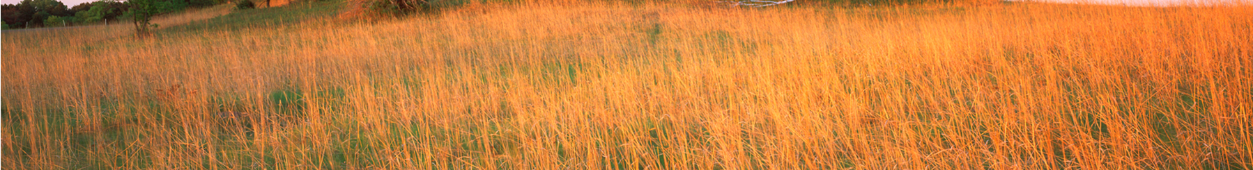 Banner of prairie grass