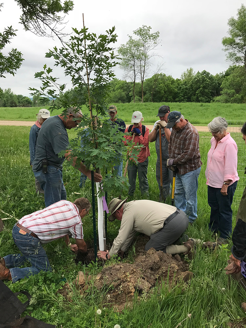 Oak savanna restoration project tree planting on June 2, 2018