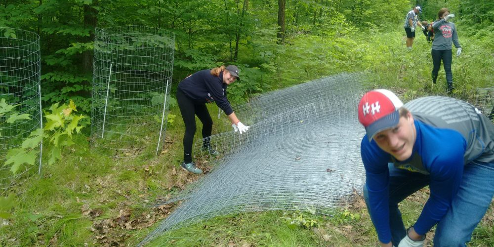 Four volunteers in woods with fencing