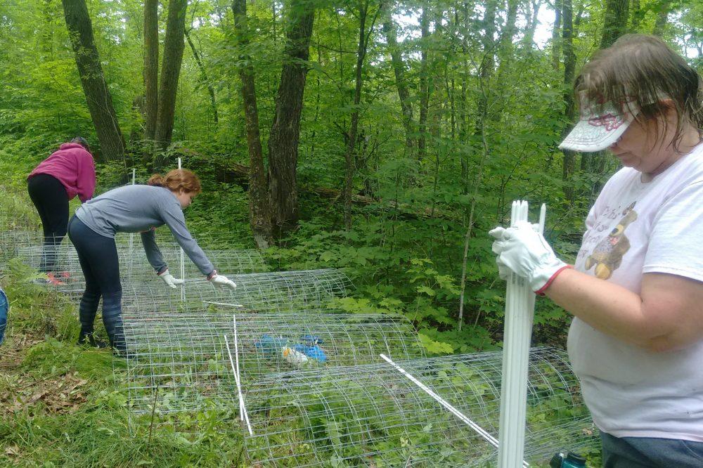 Three women installing fencing in woods