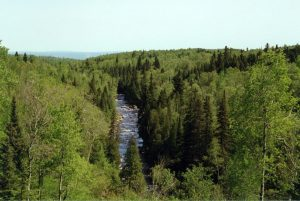 Vista of river through forest