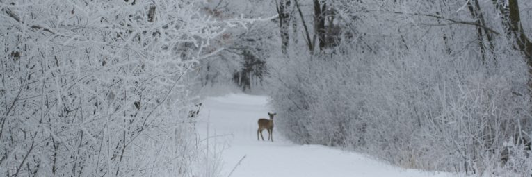Winter wonderland with a deer on the trail