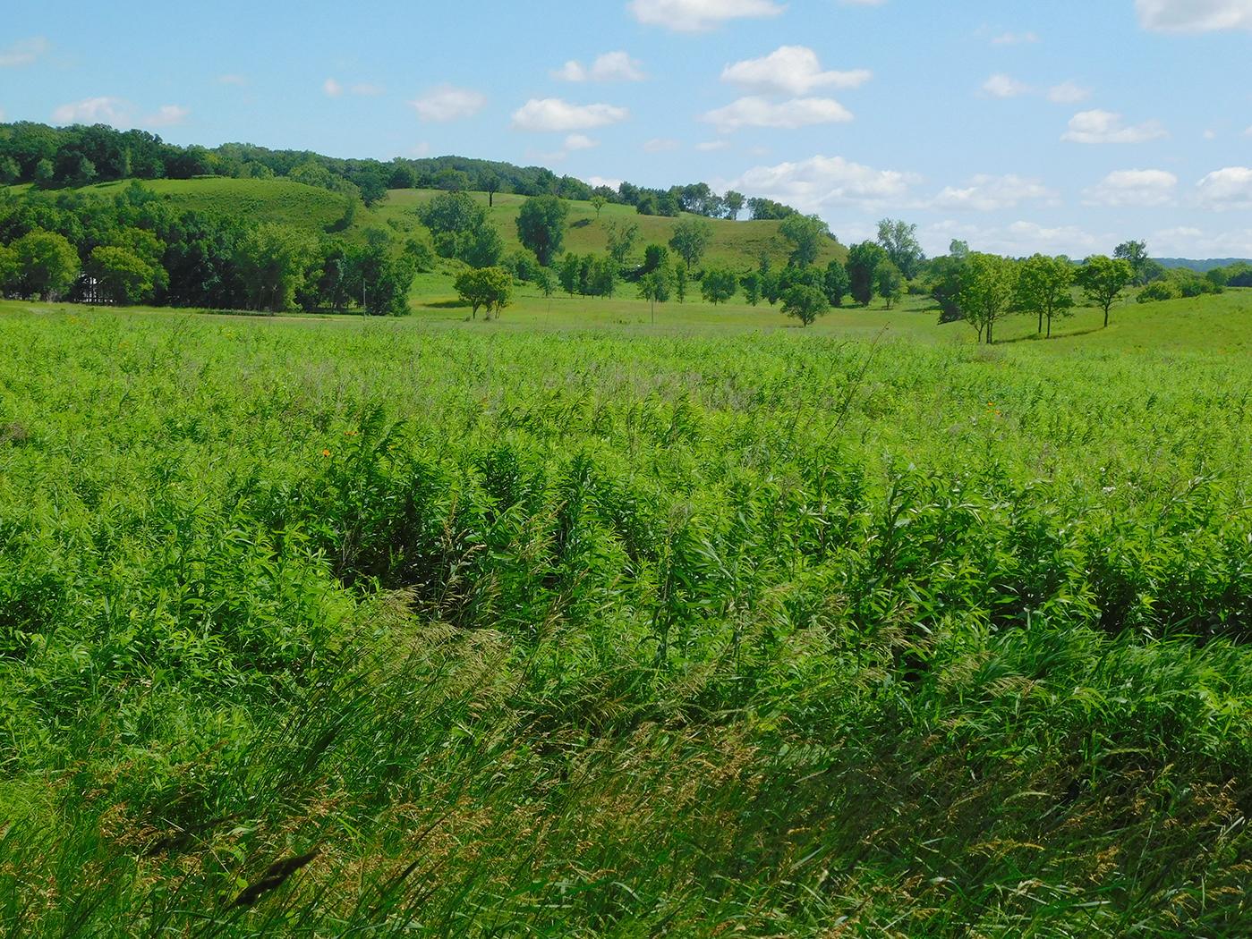Landscape of grasslands