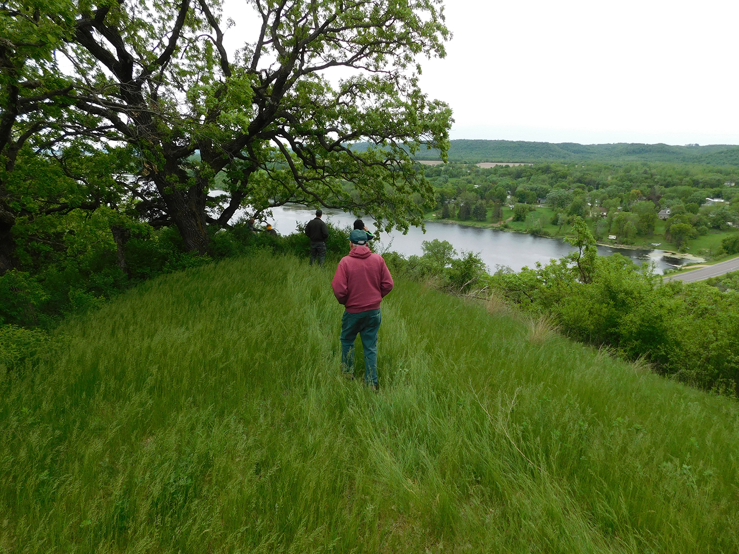 person walking in long grass toward overlook