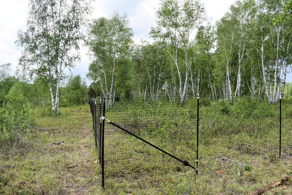 Completed deer exclosure fencing