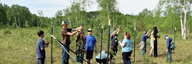 volunteers constructing a deer exclosure fence