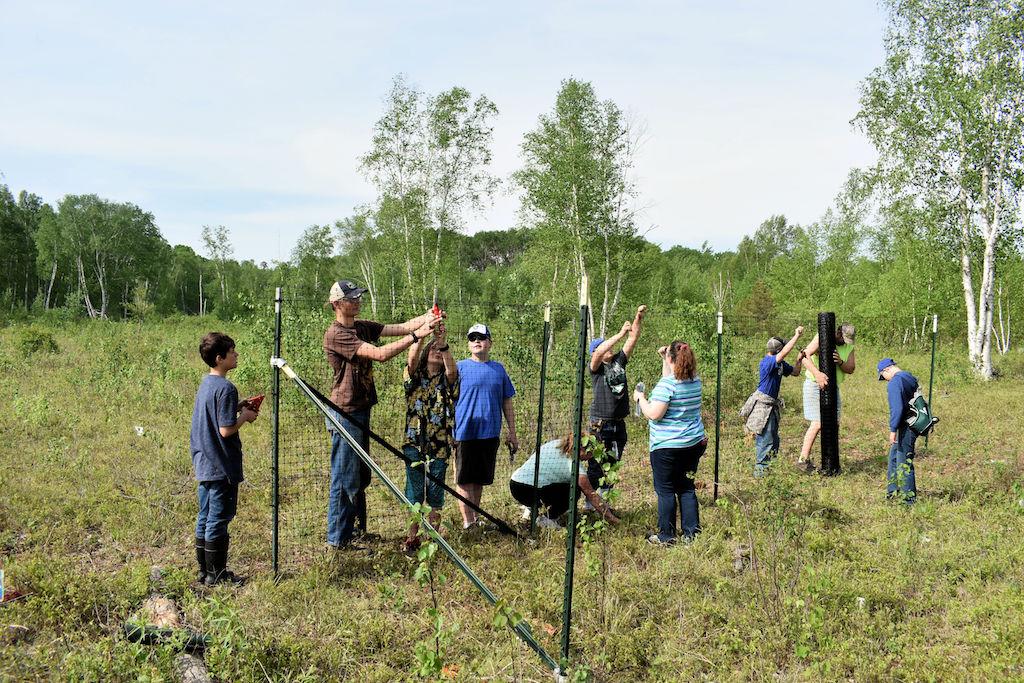 volunteers constructing a deer exclosure fence