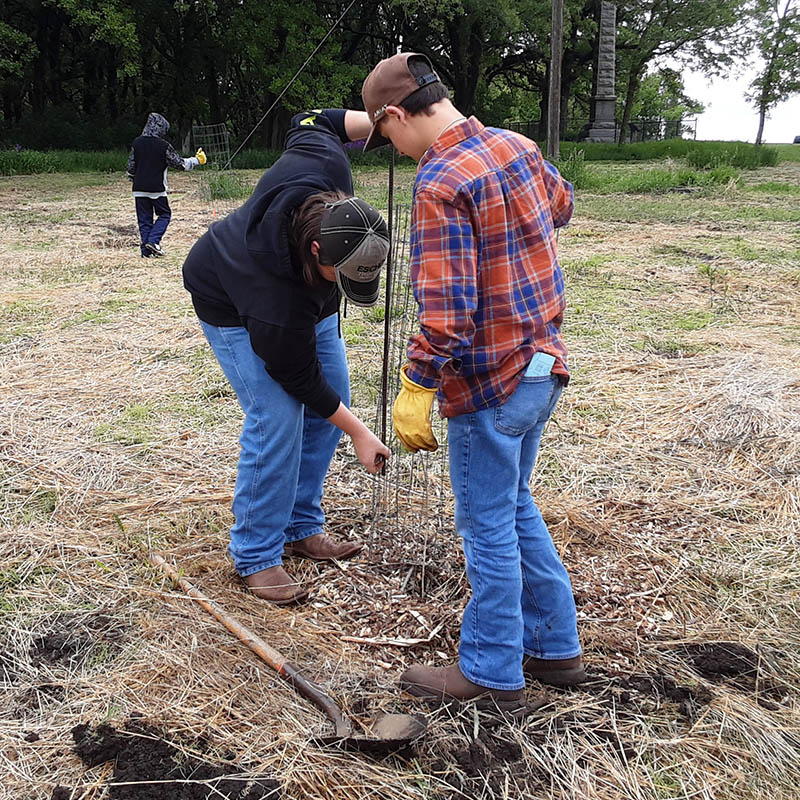 Two young volunteers install a tree cage fencing