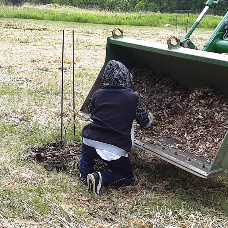 A young volunteer pulls mulch from a tractor and places around a newly planted tree