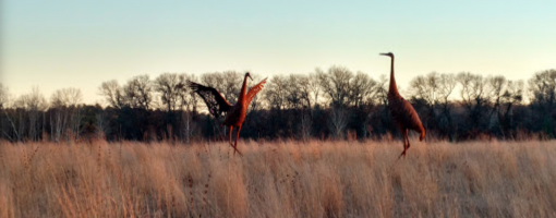 bird statues in the prairie