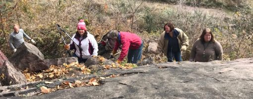 Five adults working with clippers and gloves near rock mound
