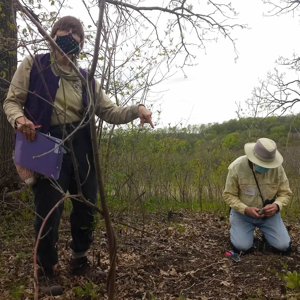 volunteer demonstrates how to plant a bare root plant