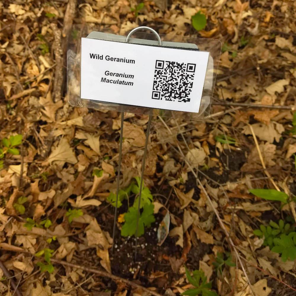 Wild geranium id sign with qr code