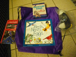 birds activity kit