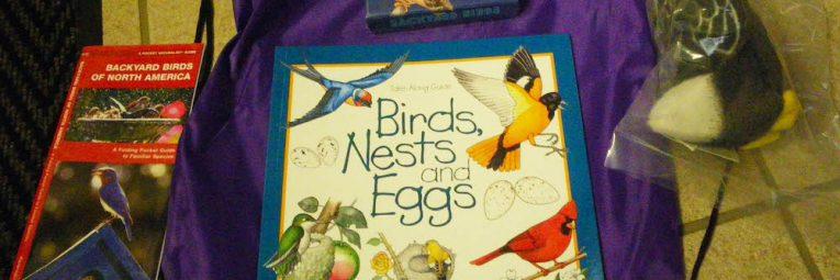 birds activity kit