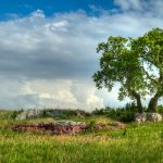 Oak in grasslands with boulder